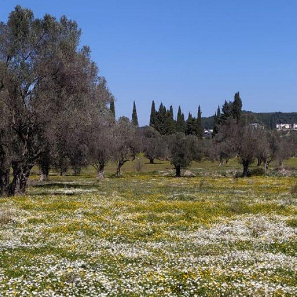 Covid-19 Gözlemleri ve Doğaya Dönüş